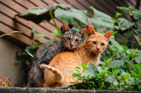 110727cats3.jpg