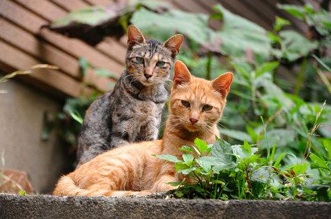 110727cats4.jpg