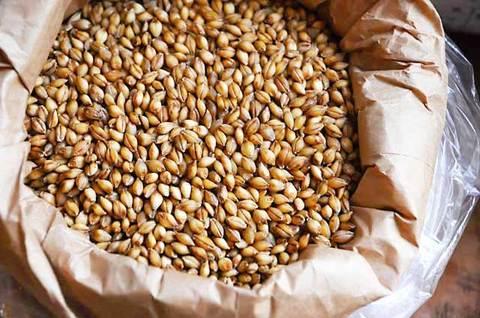 110902hulless-barley.jpg