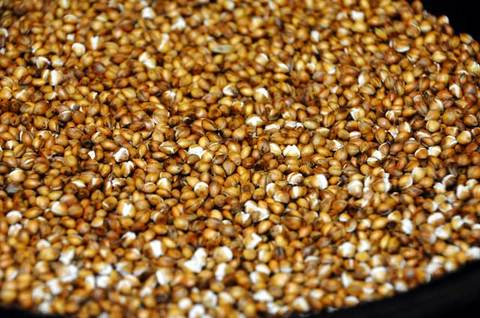 110904hulless-barley3.jpg